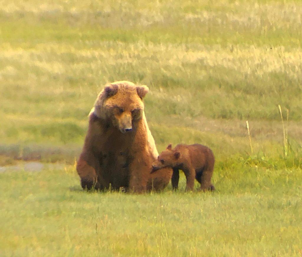 Bear mama